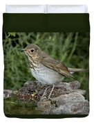 Swainsons Thrush Duvet Cover