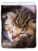 Sweet Small Kitten  Duvet Cover