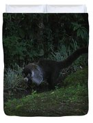 Tayra Costa Rica Animals Zoo Habitat Indigenous Population Mixing With Travellers Enjoying And Being Duvet Cover