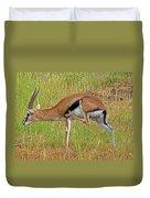 Thomson's Gazelle Duvet Cover