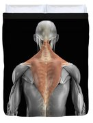 Trapezius Muscle With Skeleton Duvet Cover