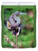 Tricolored Heron In Breeding Plumage Duvet Cover