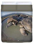 Volcan Alcedo Giant Tortoises Wallowing Duvet Cover by Tui De Roy