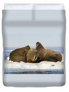 Walruses Resting On Ice Floe Duvet Cover