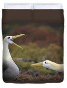 Waved Albatross Courtship Display Duvet Cover by Tui De Roy