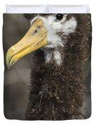 Waved Albatross Molting Juvenile Duvet Cover