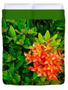 West Indian Jasmine In Sukhothai Historical Park-thailand Duvet Cover