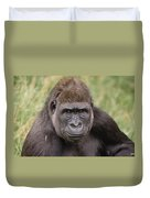 Western Lowland Gorilla Young Male Duvet Cover