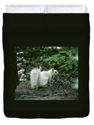 White Squirrel Duvet Cover