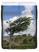 Wind-bent Tree In Tierra Del Fuego Duvet Cover