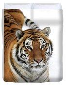 Tigre De Siberie Panthera Tigris Altaica Duvet Cover