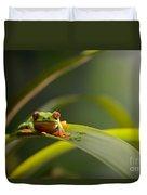 Red Eyed Tree Frog Duvet Cover
