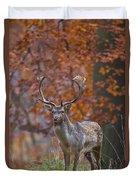 110221p135 Duvet Cover