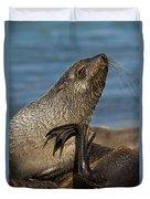 Antarctic Fur Seal Duvet Cover