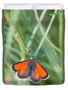 12 Balkan Copper Butterfly Duvet Cover