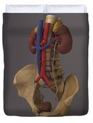 The Renal System Duvet Cover