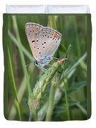 13 Balkan Copper Butterfly Duvet Cover