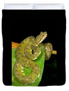 Eyelash Viper Duvet Cover