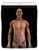 The Muscle System Duvet Cover