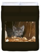 Timber Wolf Pup Duvet Cover