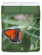 14 Balkan Copper Butterfly Duvet Cover
