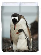 Gentoo Penguin With Young Duvet Cover