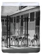 1930s Kennel Yard Full Of Foxhound Dogs Duvet Cover