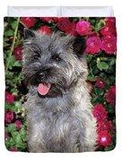 1990s Cairn Terrier Dog Standing Duvet Cover