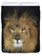 African Lion Portrait Wildlife Rescue Duvet Cover