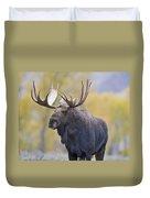 Autumn Bull Moose IIi Duvet Cover