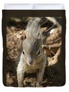 Baby Rock Squirrel Duvet Cover