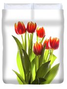 Backlit Tulip Flowers Against White Duvet Cover
