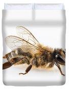 Bee Species Apis Mellifera Common Name Western Honey Bee Or Euro Duvet Cover