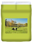 Belted Galloway Cows Grazing On Grass In Rockport Farm Fall Main Duvet Cover