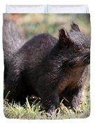 Black Squirrel Duvet Cover