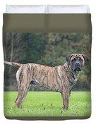 Boerboel Dog Duvet Cover