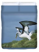 Bullers Albatross With Colorful Bill Duvet Cover