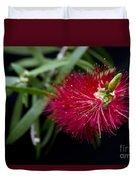 Callistemon Citrinus - Crimson Bottlebrush Hawaii Duvet Cover