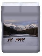 Elk Crossing, Banff National Park, Alberta Duvet Cover