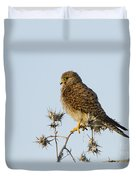 Common Kestrel Falco Tinnunculus Duvet Cover