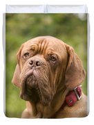 Dogue De Bordeaux Duvet Cover