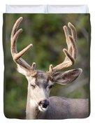 Funny Mule Deer Buck Portrait With Velvet Antler Duvet Cover