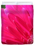 Gerbera Daisy Named Raspberry Picobello Duvet Cover