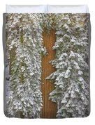 Giant Sequoias And Snow  Duvet Cover by Yva Momatiuk John Eastcott