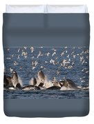 Humpback Whales Feeding With Gulls Duvet Cover