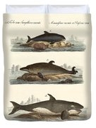 Kinds Of Whales Duvet Cover