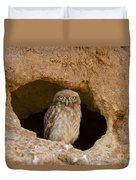 Little Owl Athene Noctua Duvet Cover