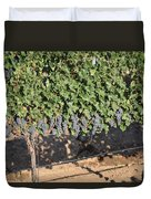 Lorimar Grapes Duvet Cover