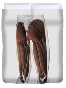Male Muscle Anatomy Of The Human Legs Duvet Cover