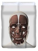 Medical Illustration Of Male Facial Duvet Cover